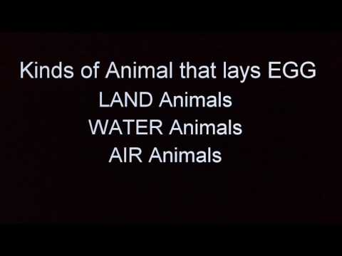 ANIMALS THAT LAY EGG