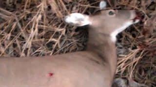 Whitetail Deer Hunt - Muzzleloader Doe Kill