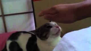 うちで飼っている猫とじゃれました。コメントよろしくお願いします。