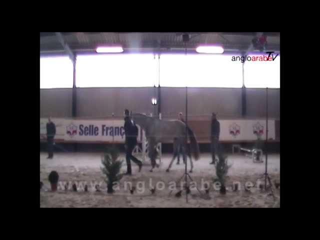 AngloaraveTV presente en la subasta de Vassily de Lassos
