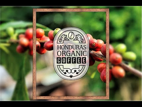 Honduras Organic Coffee,,,, Real Organic Coffee/ EER PICTURES