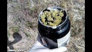 Cios w przestępczość narkotykową. Policjanci z Nowej Soli zlikwidowali 8 plantacji
