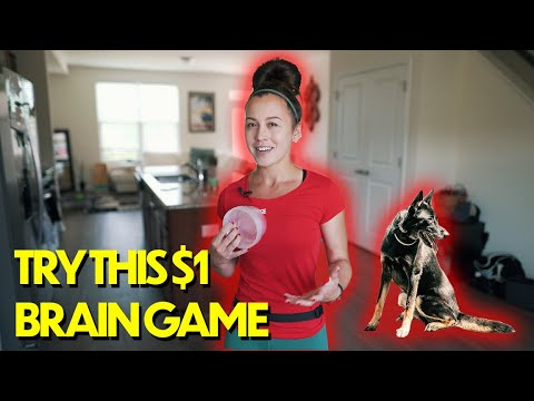 Try THIS $1 Dog Training BrainGame! (must watch)