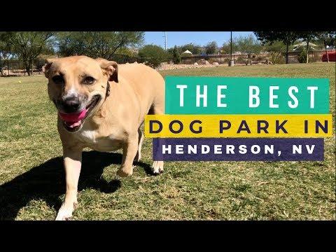 Dog Parks In Henderson NV: Heritage Bark Park (Our Fav)
