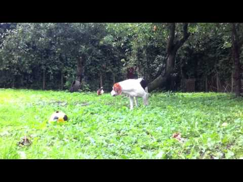 vip dog park   honden hotel 13