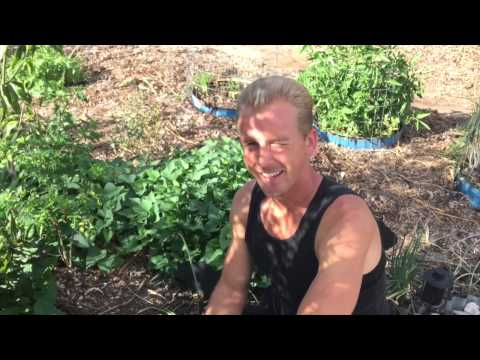 Epic Yard Farm - Garden Tour Spring 2015 - Phoenix & Tempe Arizona