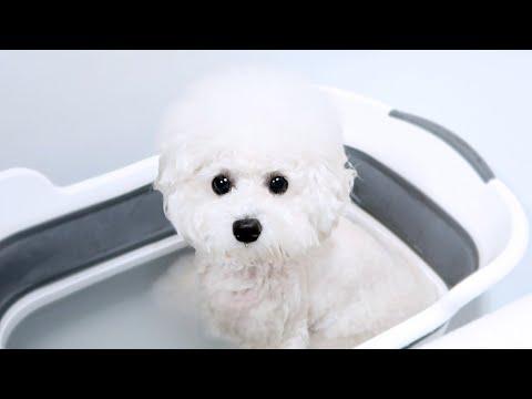 My Dog takes a Bath [Cuteness Overload]!