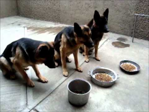 Resultado de imagen para perros comiendo