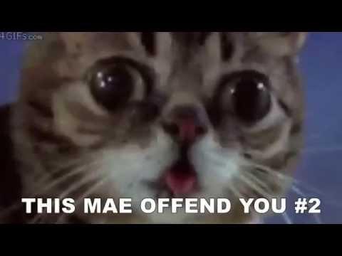 This MAE Offend You #2 | Genital Piercings, Pedo Santa