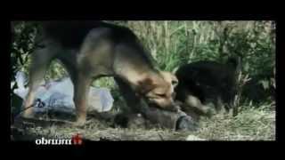 Perros salvajes en la ciudad de Moscu en Rusia
