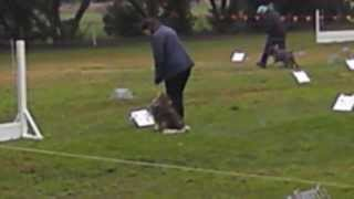 Rally Obedience - Tess - July 2013