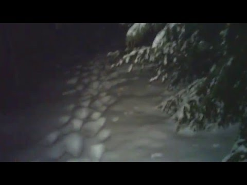 DTMoonlighter Video Headset's starlight optical tests in darkness in the woods of NH.