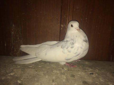 мои голубята деточки 1ч.3.03.2020.