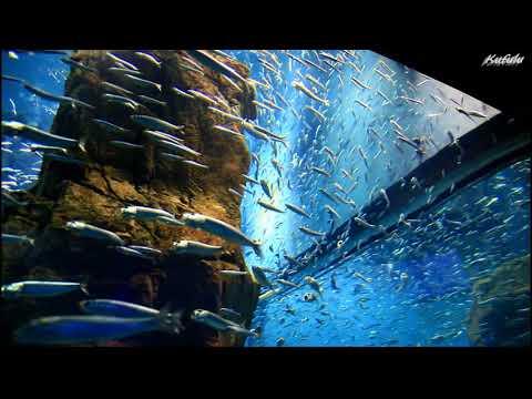 「海遊館」 Osaka Aquarium Kaiyukan | Japan Travel