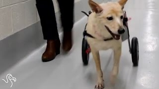 Scooter Gets A Second Chance