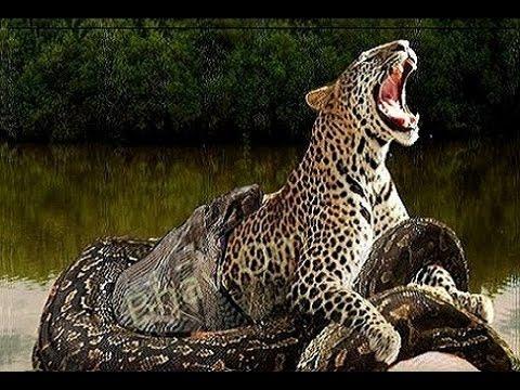 أقوى 10 حيوانات على وجه الارض