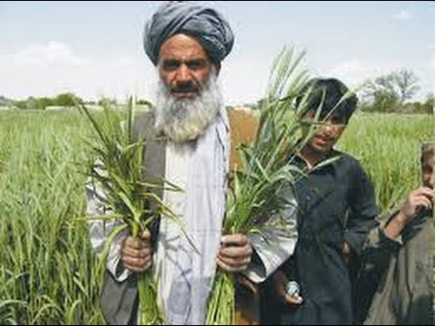 India is way ahead of Pakistan in Agriculture - Pakistan Media On India