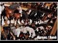 MartinH Collection - Horses (CollectA, Schleich, Papo, Safari Ltd., Mojo, Breyer)
