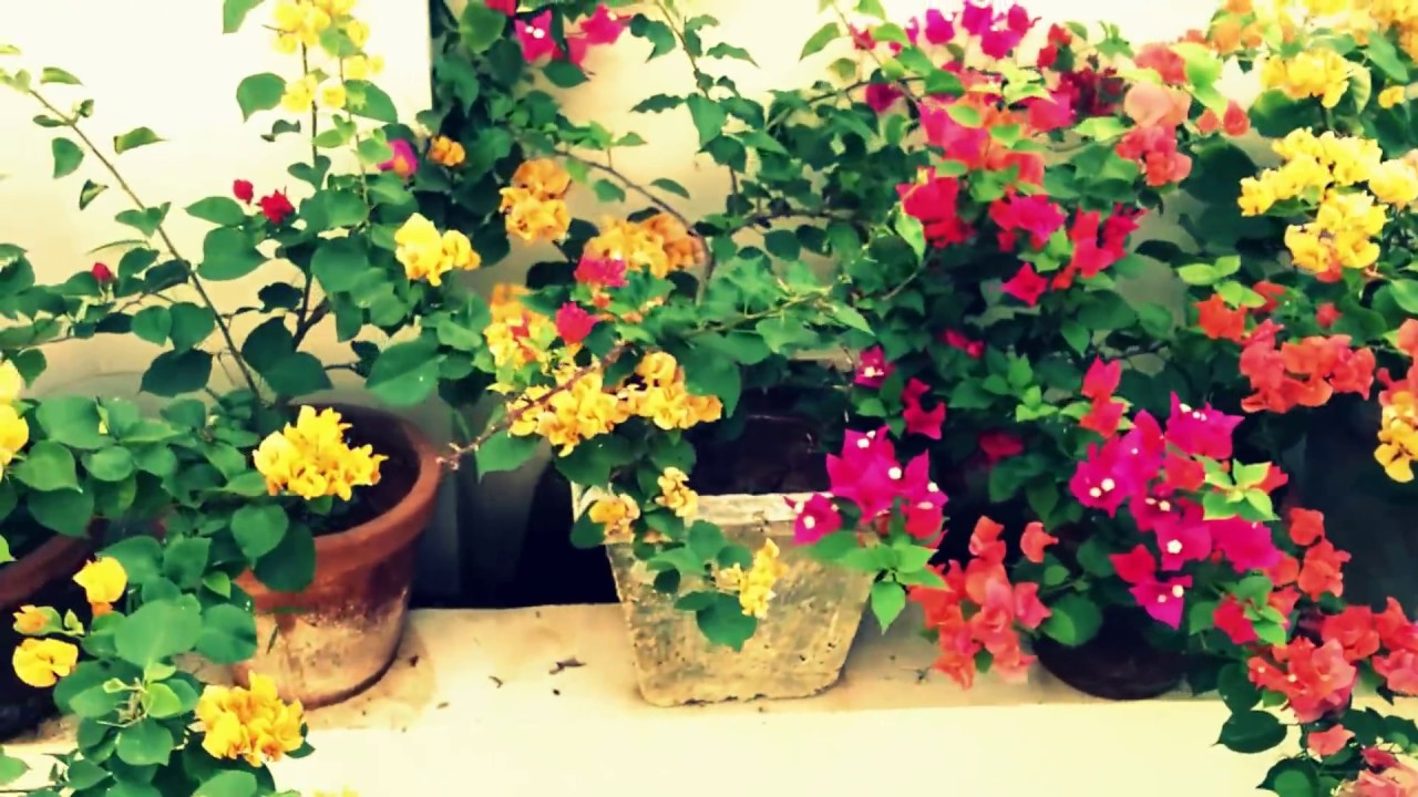 Kerala home garden youtube for Kerala garden designs