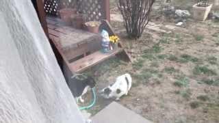 激しい猫の喧嘩再び!