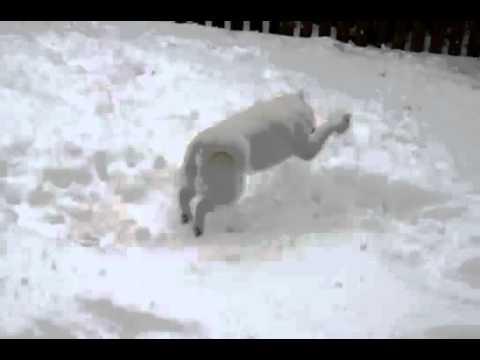 Айну (Хоккайдо) играет на снегу