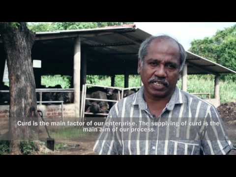 Social enterprise stories from Sri Lanka - Himalee Dairy, Maradankadawala, Sri Lanka
