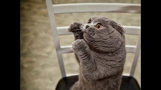 Кот боксер. Кошачьи бои. Приколы с кошками. Смешное видео с кошками 2014.
