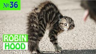 ПРИКОЛЫ 2017 с животными. Смешные Коты, Собаки, Попугаи // Funny Dogs Cats Compilation. Февраль №36