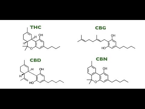THC, THCA, THCV, CBD, CBG, CBN, CBC & Terpenes