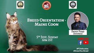 Webinar #13 : Breed orientation  Maine Coon