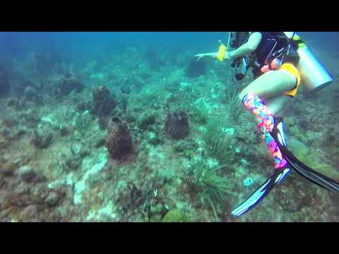 Scuba Diving - Key Largo - Conch Wall