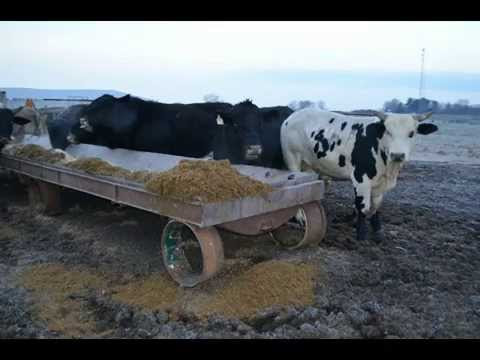 Cowtown Rodeo OffSeason Feeding Up video