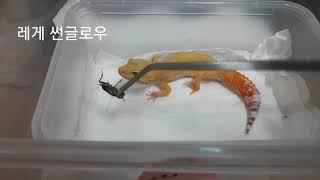 우리집 파충류