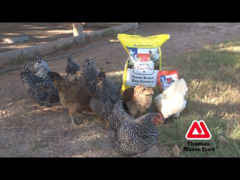Moore Hen Scratch - Thomas Moore Feed