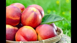 Health Benefits of Nectarines Fruit