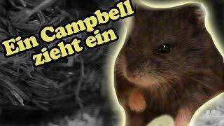 Darth Hamster zieht ein!