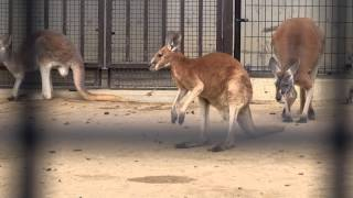 2013年1月(Jan. 2013) Kobe, Japan 神戸市立王子動物園, Oji Zoo ソニー...