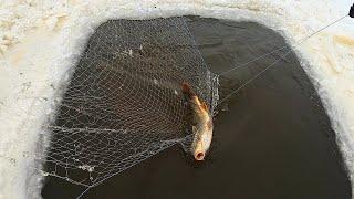 ПРОЩАЙ ГЛУХОЗИМЬЕ ЖЕЛТОПУЗЫЕ САЗАНЫ СНОВА РАДУЮТ Рыбалка на паук