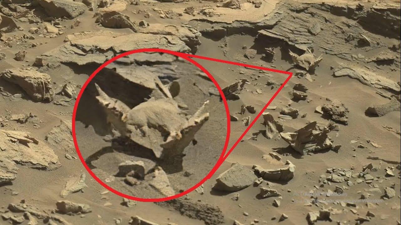 Download ¡Rover de la NASA acaba de Fotografiar algo increíble en MARTE!