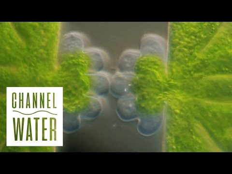 Water - The Architect Of Nature