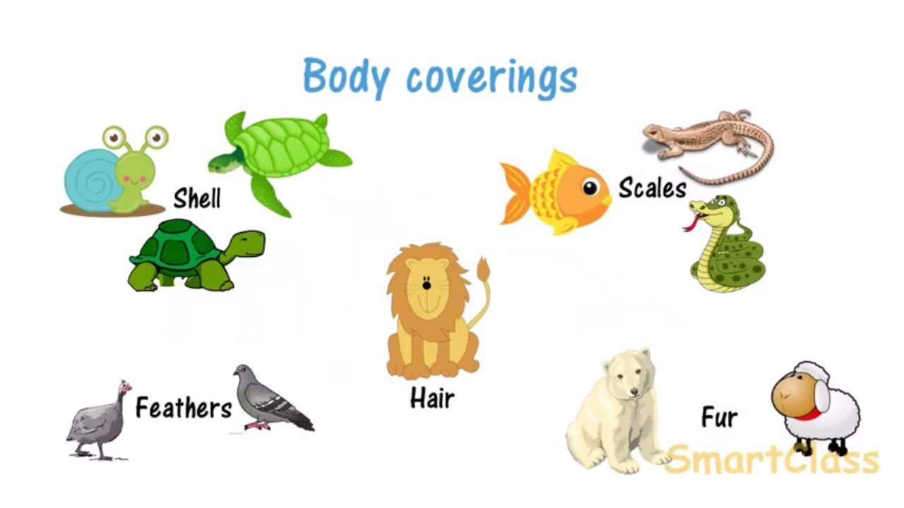 hight resolution of Animal Life CBSE class 5 Science - YouTube