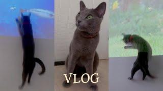 Vlog #15 빔프로젝터로 고양이 예능 영상 보여주기…
