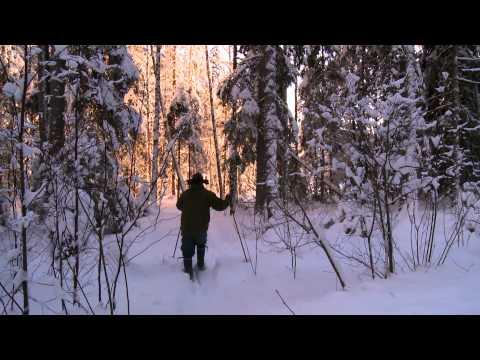 Sibbo Storskog - Från bergsskogar till herrgårdar