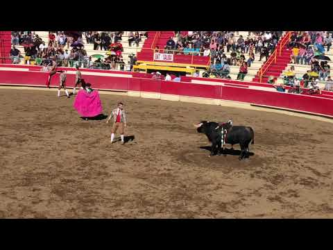 I went to a BULLFIGHT!!