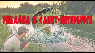 рыбалка в Санкт-Петербурге  /  на Лахтинском разливе