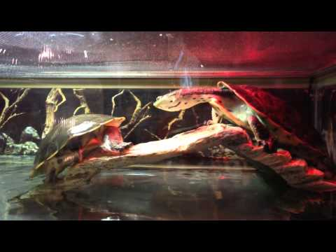 Exotic Pets (Pet Store) Tour - in Las Vegas, NV