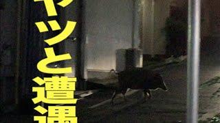 hy4_4yh(ハイパーヨーヨ)×日本エレキテル連合ツーマンLIVE@代官山UNI...