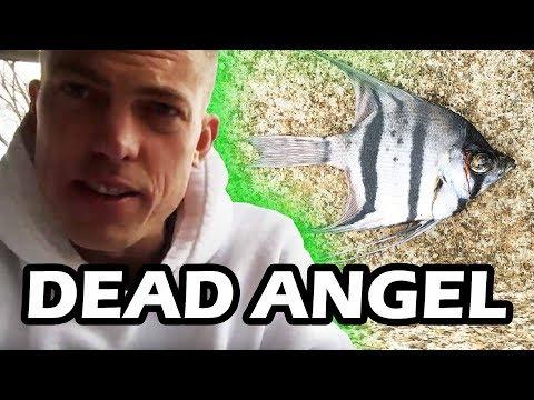 DEAD FISH! Maya's Angel Fish Died