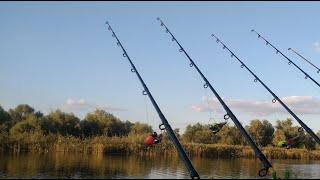 Рыбалка с берега днем сход КАРПА И караси в ТУМАНЕ