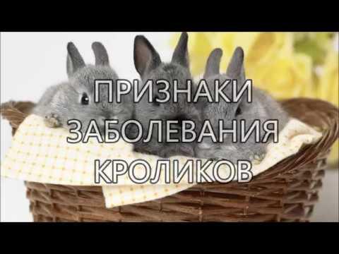 Миксоматоз у кроликов лечение болезни, вакцины, фото